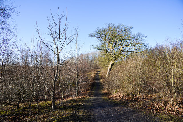 Path in developing woodland