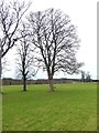 NZ0461 : Wintry trees in Bywell Park by Oliver Dixon