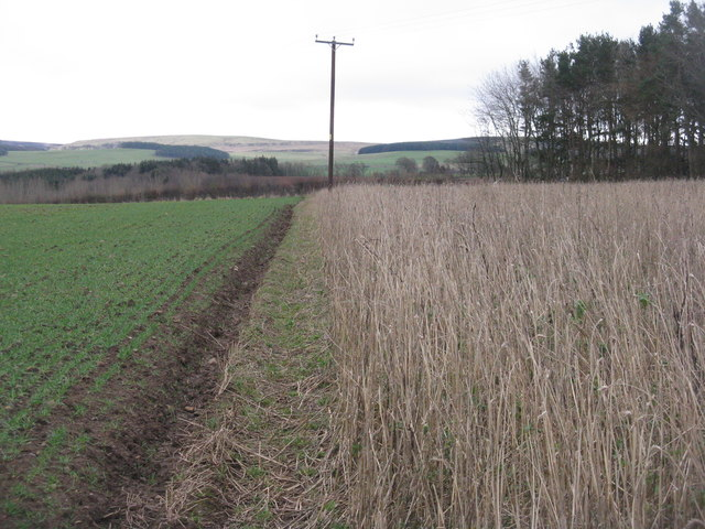 Field margin at Baro