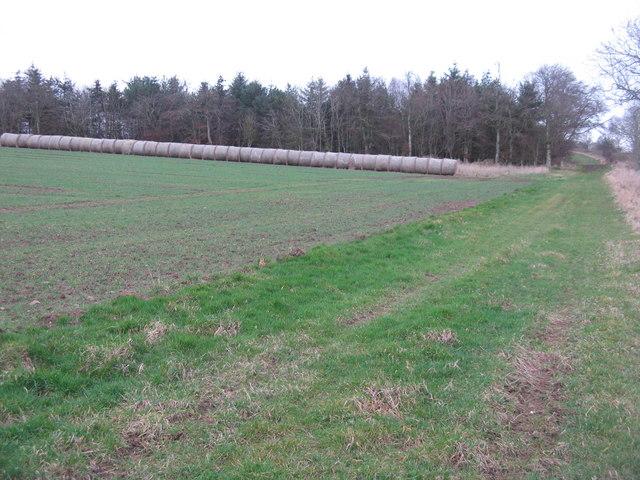 Winter wheat near Baro