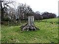 NZ1649 : Tree stump beside Tower Wood by Robert Graham