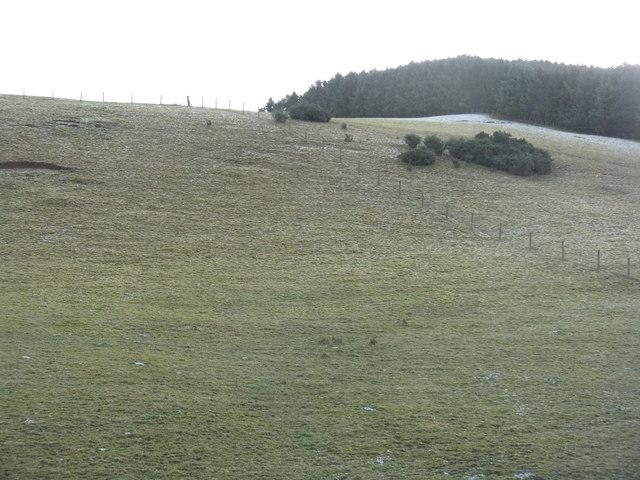 Plantation on Aikieside Hill