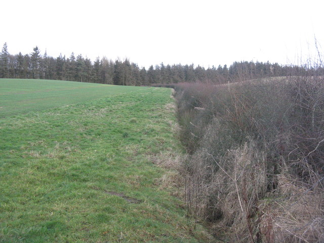 Field margin and drain near Gifford