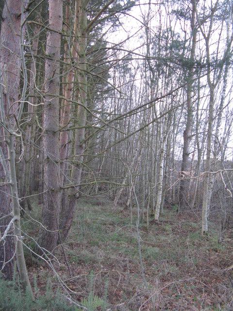 Roadside woodland at Pyotshaw