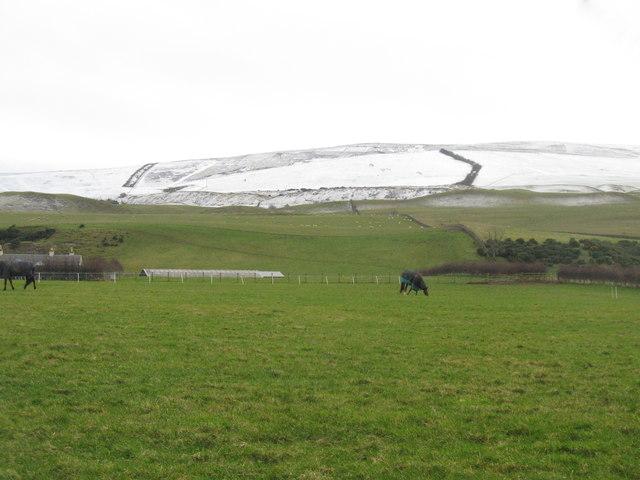 Pasture at Latch