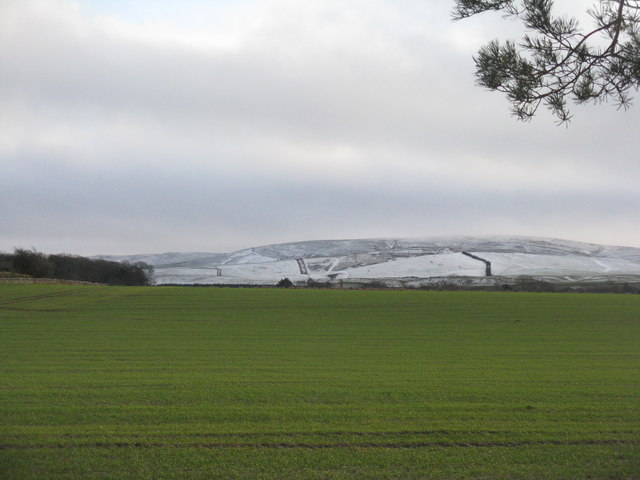 Winter cereals at Woodhead