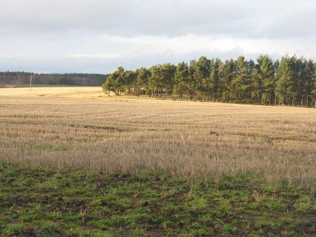 Stubble field at Woodhead