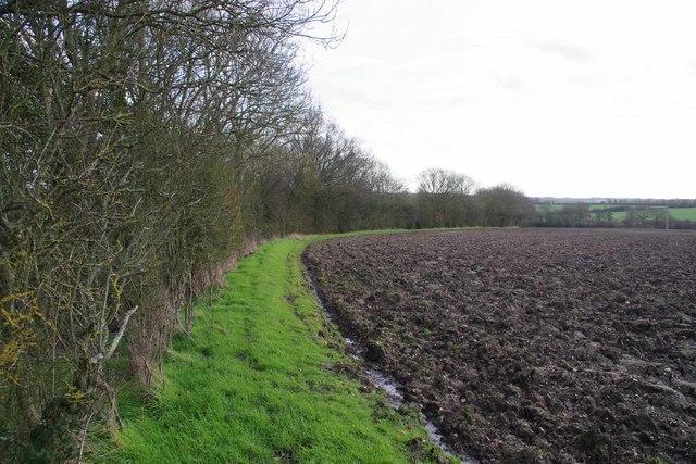 Field Margin Beside Coleman's Farm Lane