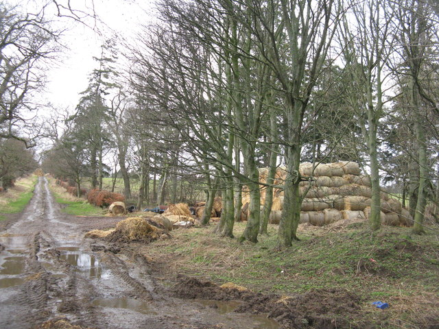 Straw pile at Yester Mains