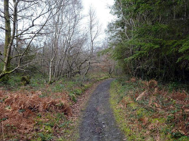 Footpath in Canaston Wood