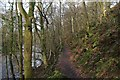 SE0559 : Dales Way in Haugh Wood by Chris Heaton