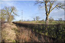 NZ3034 : Hedge and ditch between road and field by Trevor Littlewood