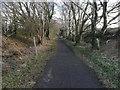 NZ1256 : The Derwent Walk near White Byerside Farm by Clive Nicholson