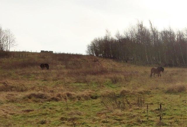 Rough grazing at Rainton Meadows