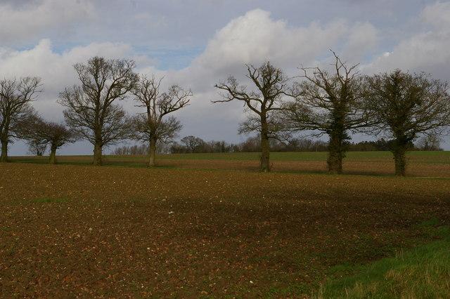 Fields north of Church Lane, Ashbocking