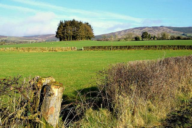Clump of trees, Castleroddy Glebe