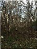 NT2774 : Woodland strip by Richard Webb