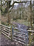 SS5289 : Winter woodland by Alan Hughes