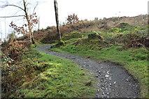 NX4464 : Bike Trail to Daltamie Hill by Billy McCrorie