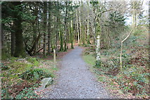 NX4465 : Trail to Bruntis Loch, Kirroughtree by Billy McCrorie