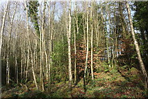 NX4465 : Kirroughtree Forest in Sunlight by Billy McCrorie