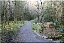 NX4465 : Trail to Bruntis Loch by Billy McCrorie