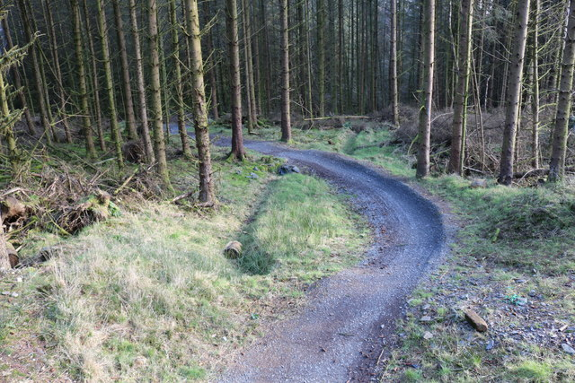 New Bike Trail, Kirroughtree Forest