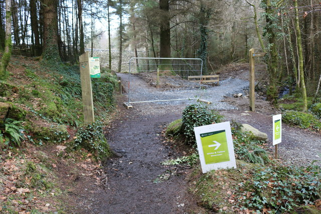 Trails in Kirroughtree Forest