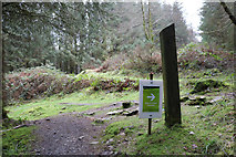 NX4464 : Follow the Arrow, Kirroughtree Forest by Billy McCrorie