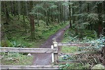 NX4464 : Forest Trail to Bruntis Loch, Kirroughtree Forest by Billy McCrorie
