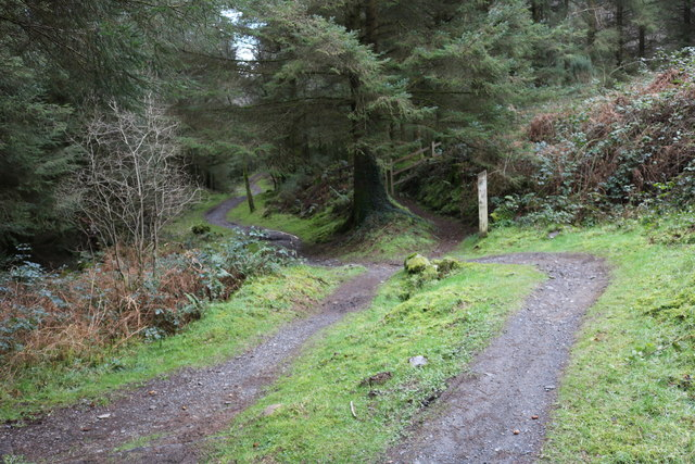 Trail to the Visitor Centre, Kirroughtree Forest