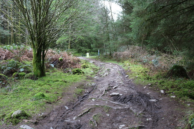 Forest Trail, Kirroughtree