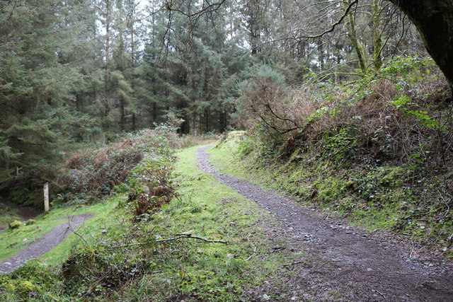 Forest Trails, Kirroughtree