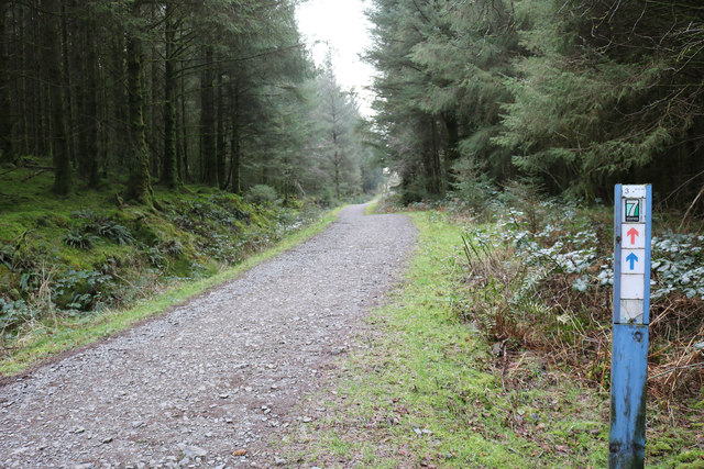 7stanes Trail, Kirroughtree Forest
