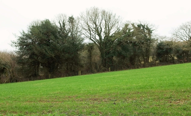 Field by the A389