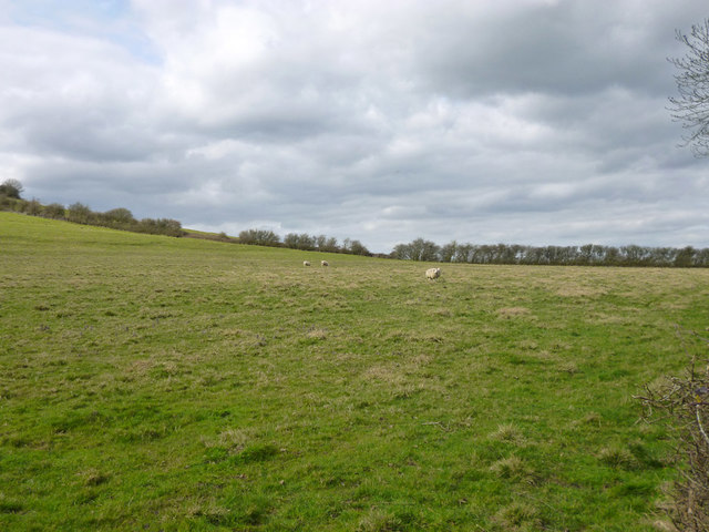 Field west of Carter's  Lane