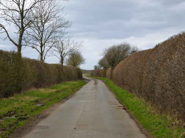 Lane towards Hogshaw