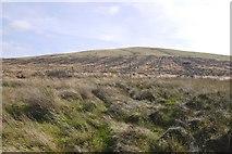 NN8403 : Glentye Hill by Richard Webb