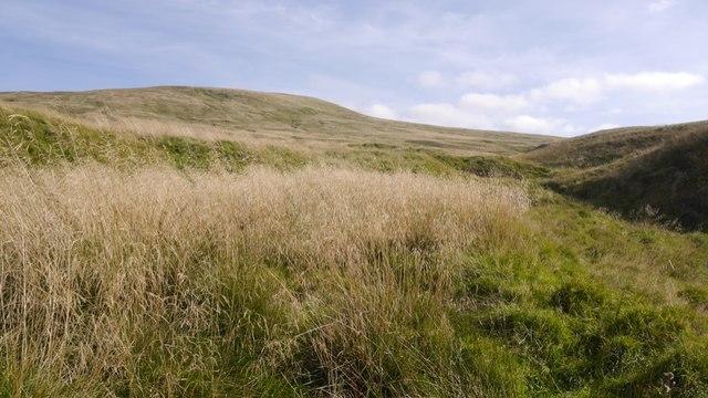 Millstone Burn and Mickle Corum