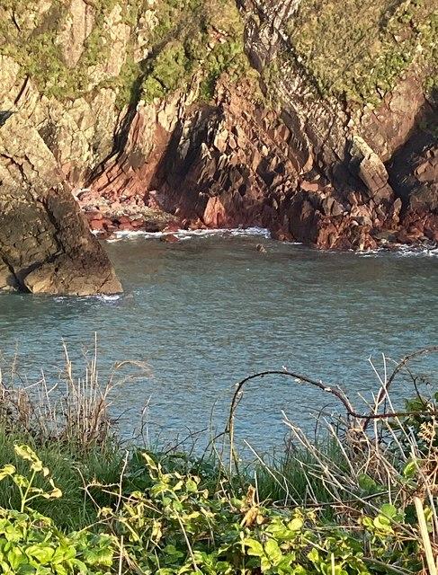 Cambrian sandstone at Caerfai Bay