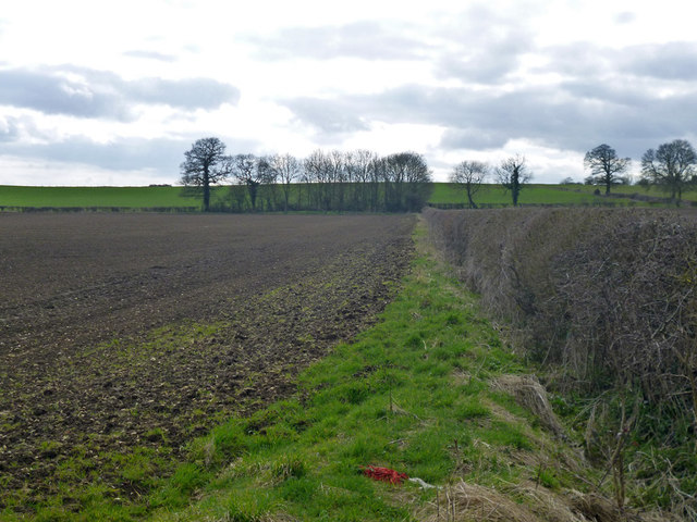 Hedgerows and fields near East Claydon