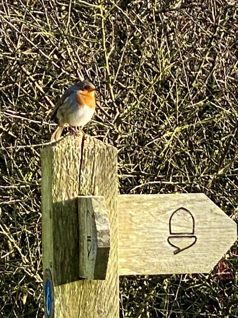 Which way now? - a Robin's dilemma