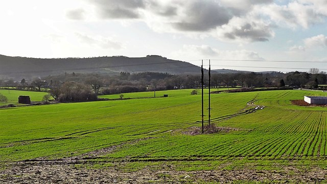 View WSW towards Chanctonbury Ring - from the footpath near Shelleys