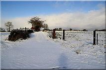 H5559 : Snow covered lane, Garvaghy by Kenneth  Allen