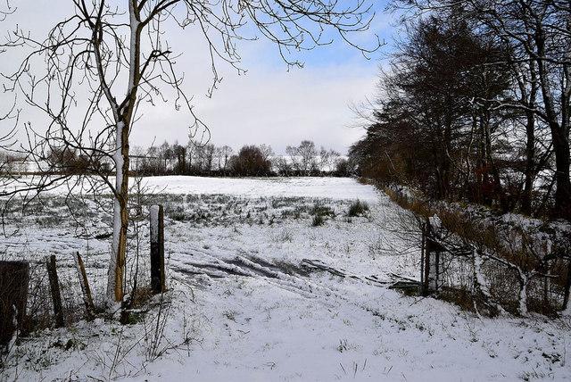 An open field, Tycanny