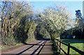 SU9974 : Blackthorn in Church Road by Des Blenkinsopp