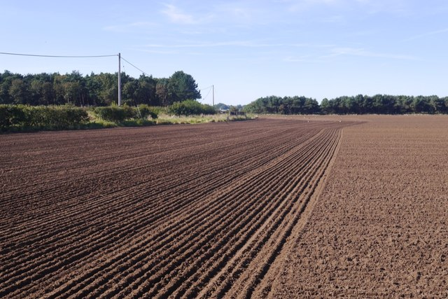 Newly planted field