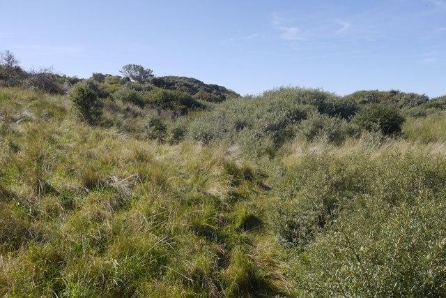 Buckthorn, Gullane