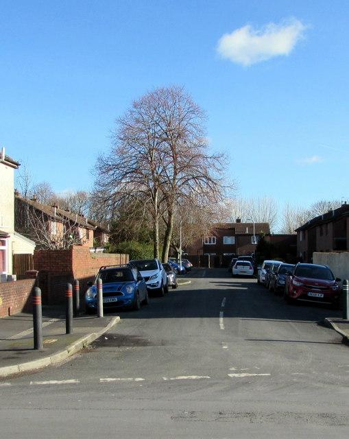 Deciduous trees in Price Close, Newport