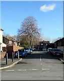 ST3186 : Deciduous trees in Price Close, Newport by Jaggery